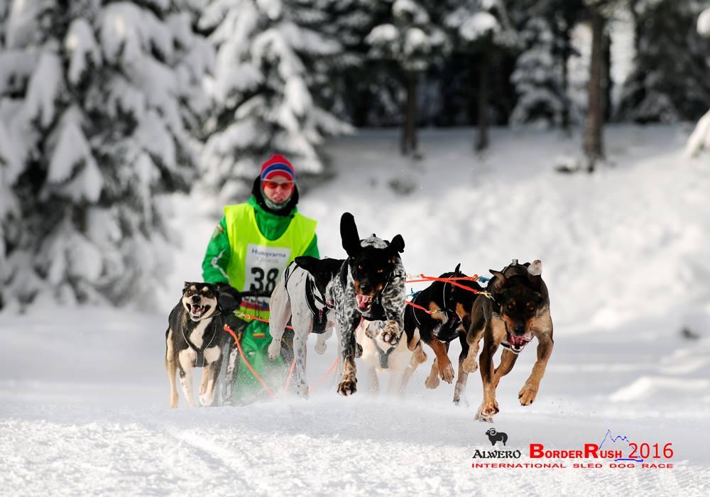 Alwero border-Rush2016, psi zaprzęg, Polana Jakuszycka